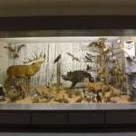 Tiere aus Wald und Feld